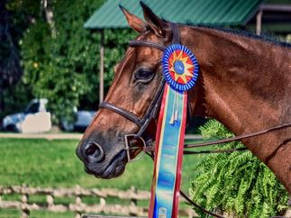 Horse Show Jumping Services Texas