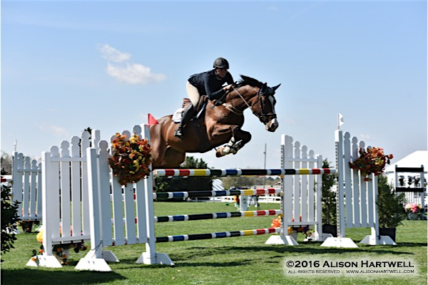 Horse Jumping Stables Services