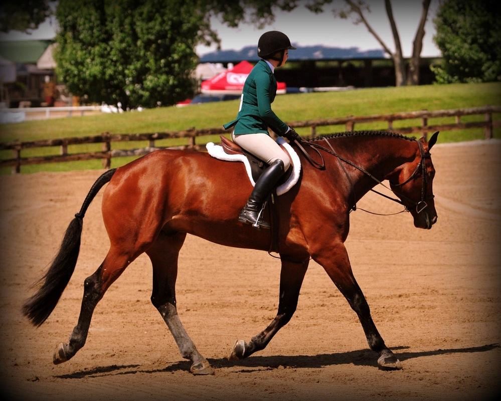 Comly Sport Horses Texas