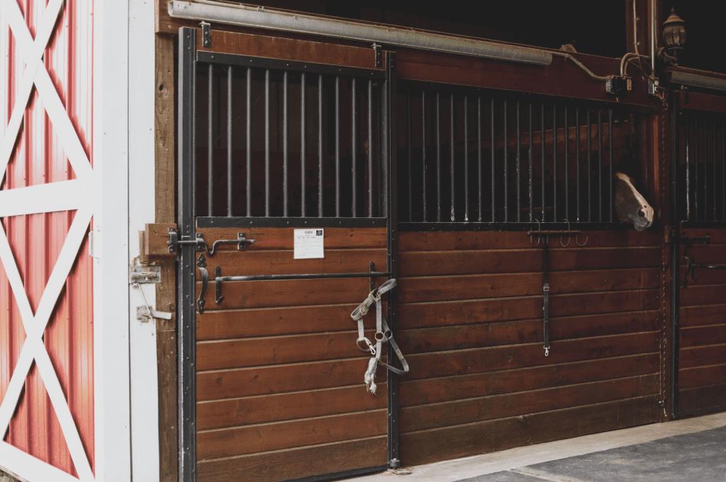 Hunter Jumper Horses Boarding Texas