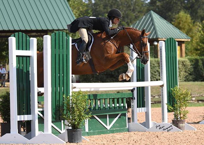 warmblood horses for sale texas