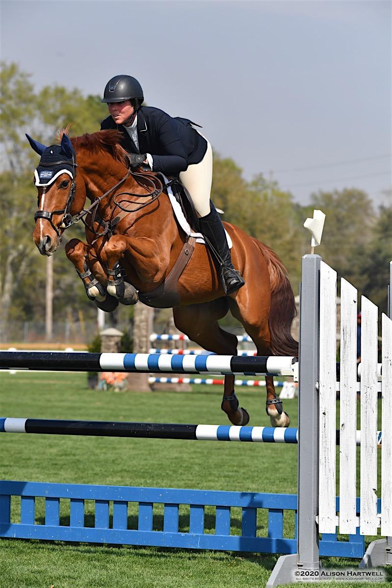 Hunter Horses For Sale Texas