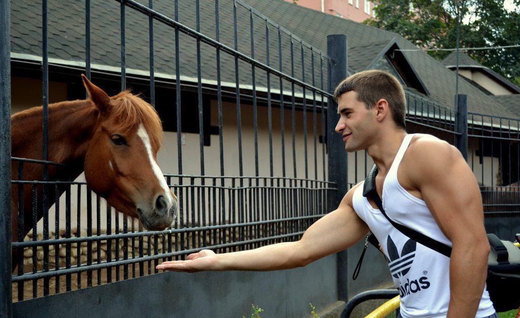 hunter horses for sale