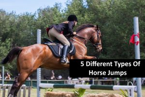 5 Different Types Of Horse Jumps