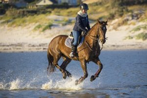 Grand Prix Horse Rider
