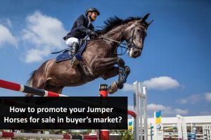 Jumper Horses for Sale