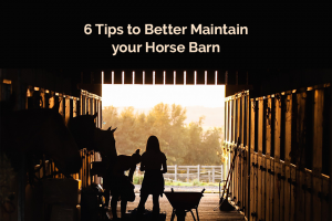 Horse Jumping Barn