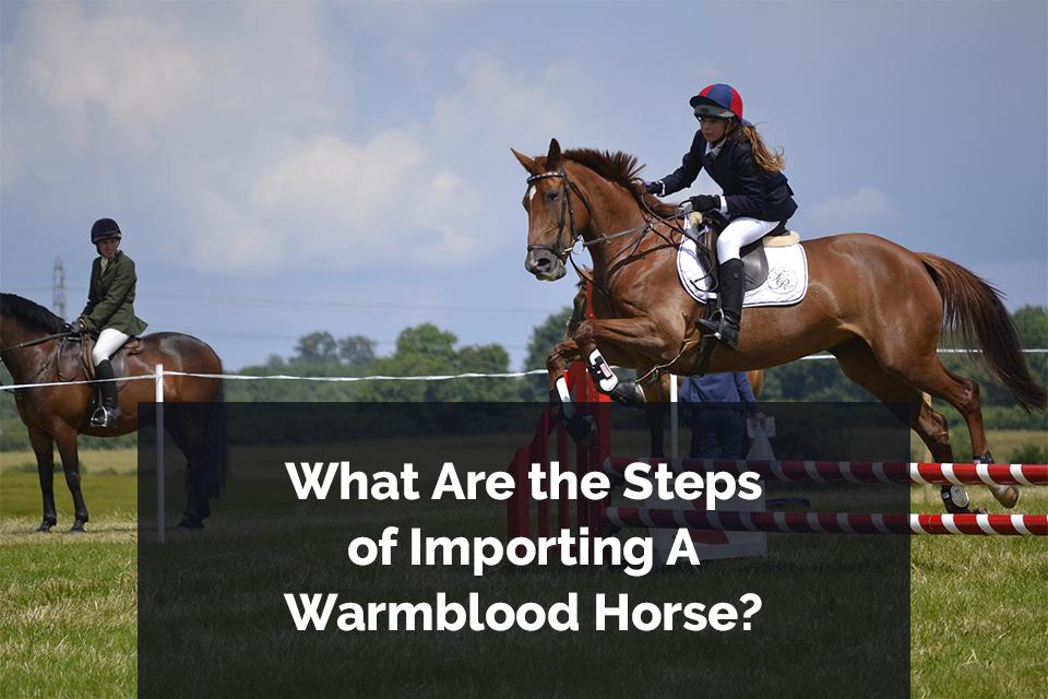 Warmblood Horses Imports