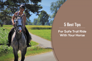 horse training services