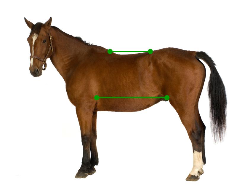 Back vs underlying abdomen